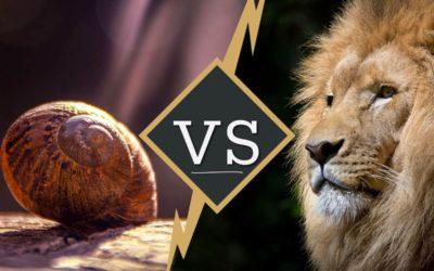 Etes-vous un Escargot ou un Lion de la vente ?
